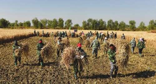 平均亩产1203.36公斤!袁隆平超级稻在邯郸永年再创世界纪录