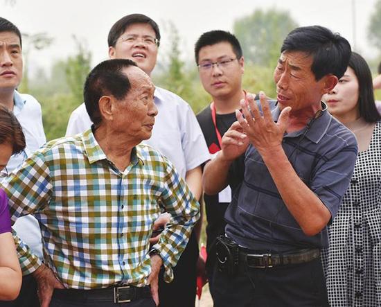 超级稻在邯郸永年再创世界纪录