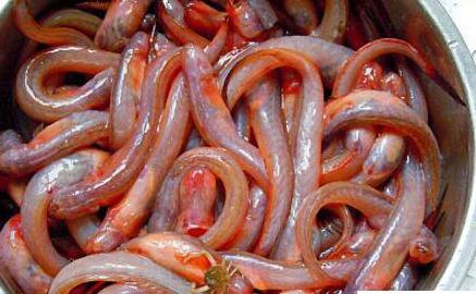 狼牙虾虎鱼可以食用吗?