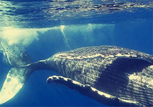 鲸鱼种类大全