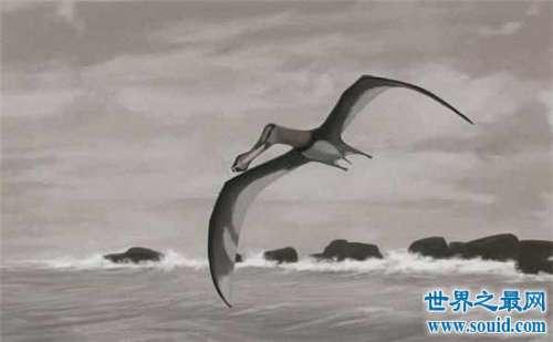盘点全球六大神秘生物,你真的了解这个世界的吗