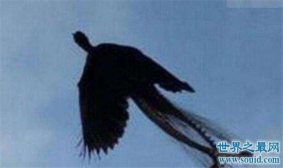 卫星拍到的真龙凤凰,黑龙件远古凤凰事件图片(www.souid.com)