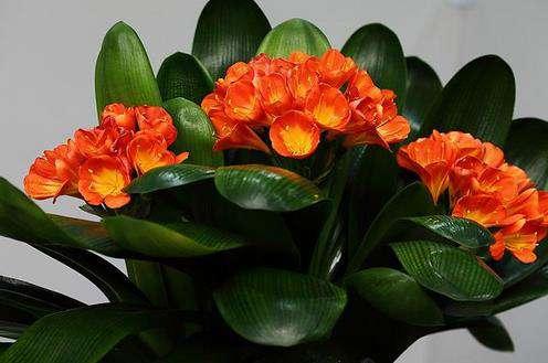 适合室内养的植物:推荐15种适合室内养的绿色植物