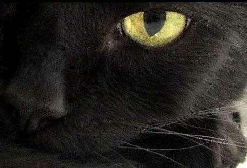 民间家里养猫的风水禁忌:民间关于猫的恐怖传说