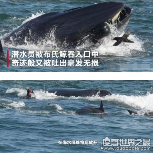 潜水员被鲸鱼吞入后又吐出,惊险逃生后心有余悸
