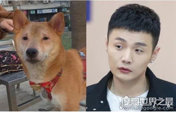 李荣浩同款狗狗上热搜,本尊回应太便宜惹笑众人