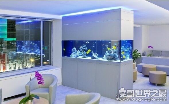 办公室鱼缸摆放位置,详解鱼缸摆放的位置和需要注意的事项