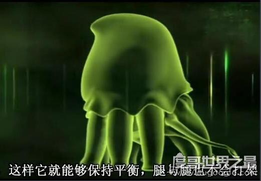 地球2亿年后的生物,大王陆鱿(高8米/能在陆地行走)