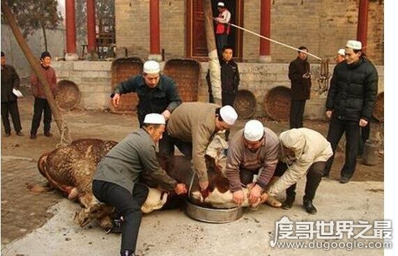 伊斯兰教为什么不吃猪肉,他们视猪为不洁之物极度的厌恶