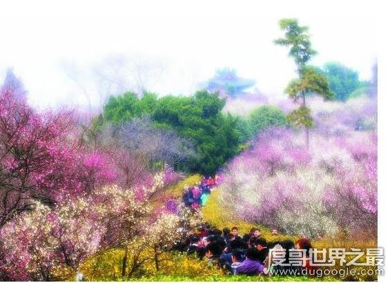 四川一高校放春假,鼓励学生和老师们去赏花、去恋爱