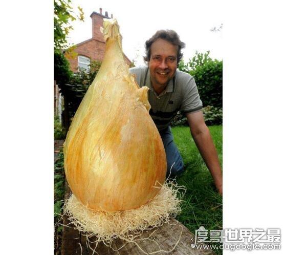 世界上最大的洋葱,男子种出16斤重的巨形洋葱