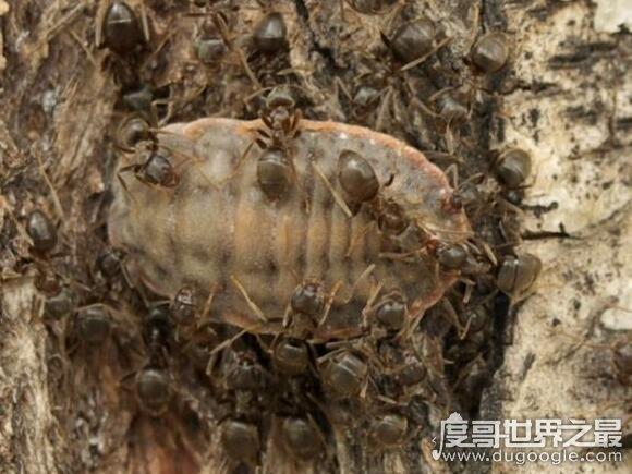 尸蹩真的存在吗,它其实是一种小说电影中虚构的昆虫