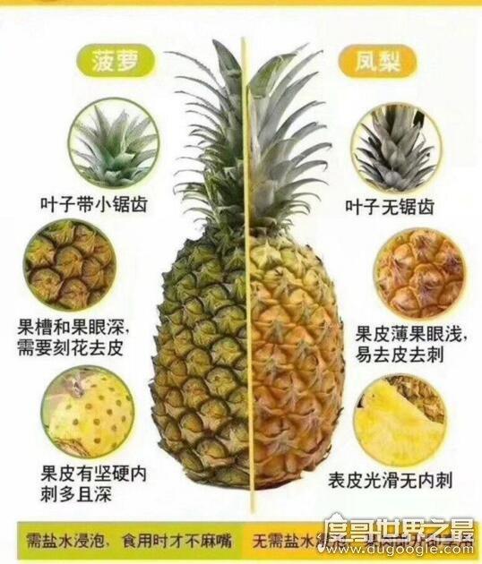 凤梨和菠萝的区别,4招教你轻松get(别再傻傻分不清了)