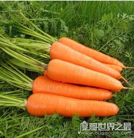 公认的六种超级降压食物,多吃芹菜/香菇对降压有帮助