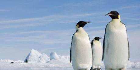 关于地球上动物的8条冷知识,看看你都了解哪几条?