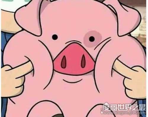 猪猪女孩是什么意思指性格开朗有点傻乎乎的可爱女生