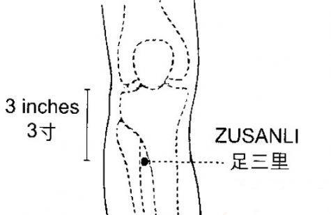 足三里的准确位置图 按摩5个穴位等于吃补药