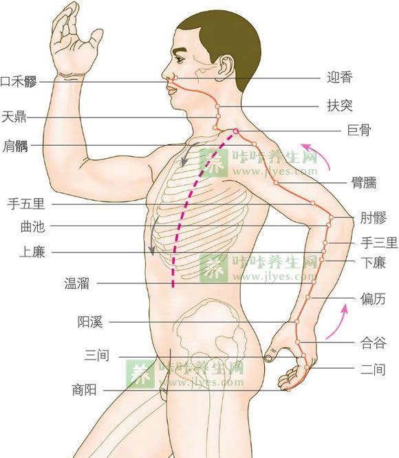 大肠经的准确位置图