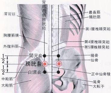 膀胱俞穴穴位的准确位置
