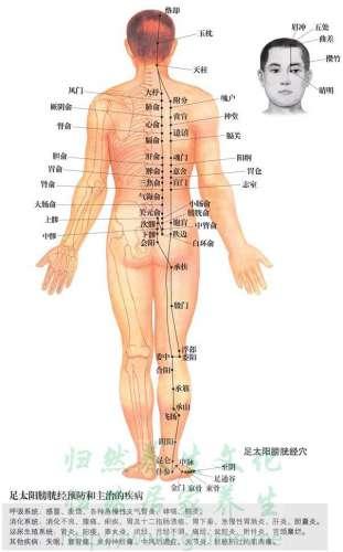 胃脘下俞穴位的准确位置图 胃俞穴_人体穴位查询