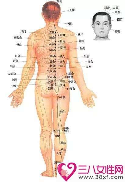 足太阳膀胱经循行路线及图解