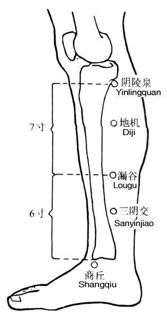 小腿肚足太阴脾经与脾胃经络相联 详细脚部穴位图解