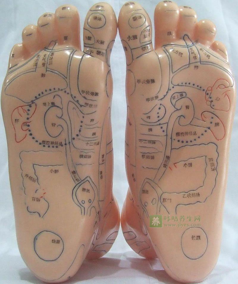女性足部反射区高清图