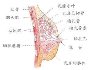 按摩承浆穴位的作用 委中穴位位置图和作用