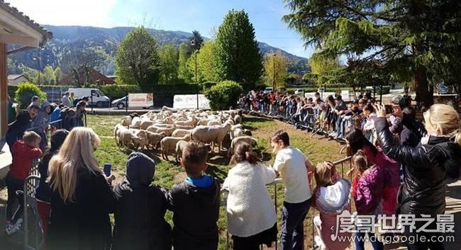 笑skr人!十五只羊登记入学(只为达到国家规定入学数额)