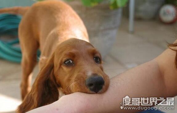 狗咬了多久过安全期,1年后就安全了(及时接种狂犬疫苗30就行)