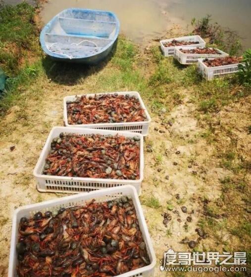 2名熊孩子毒死小龙虾3000斤,只为好玩(家长面临高额赔偿)