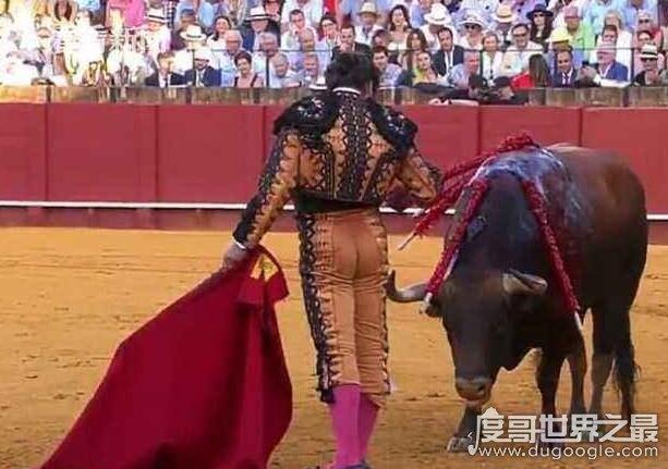 西班牙斗牛士杀公牛前擦干血泪,视频引发全世界网友争议
