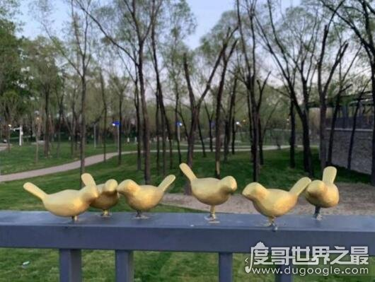 北京世园会小鸟被掰断,百余只小鸟仅剩17只(已追回30只)