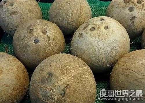 椰子怎么打开,教你怎样轻松的打开椰子吃到美味的椰肉