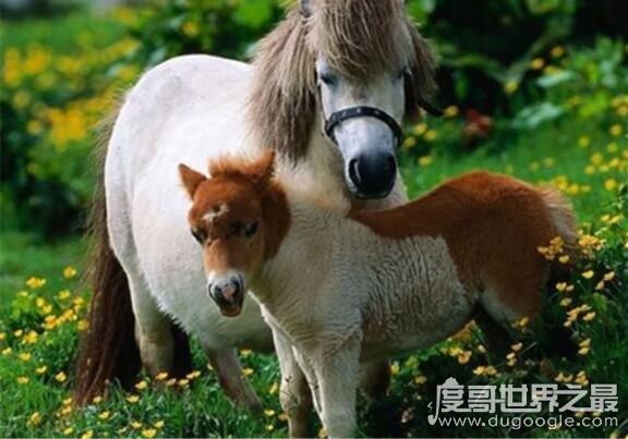 马是怎么睡觉的?站着睡觉一天能睡73次(每次不超过5分钟)