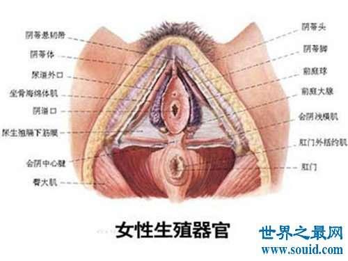 女人私处长啥样图片介绍 多种不同女性生殖器介绍