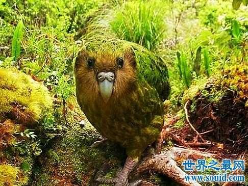 世界上最大的鹦鹉,不仅可爱还可以学你说话。