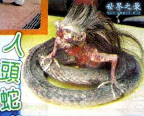 最真实的美女蛇图片,人头蛇身美人蛇(真相吓人)