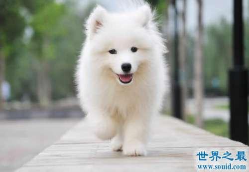 世界十大名犬排行榜,最具贵族气质的纯血种狗狗