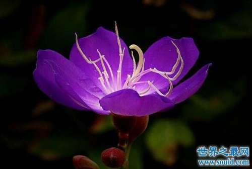 成熟的人都喜欢紫色的花,象征着尊贵成熟和完美主义