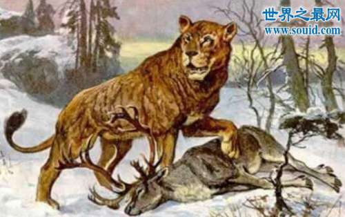 穴狮,灭绝万年的狮子的祖先(俄罗斯发现其化石)