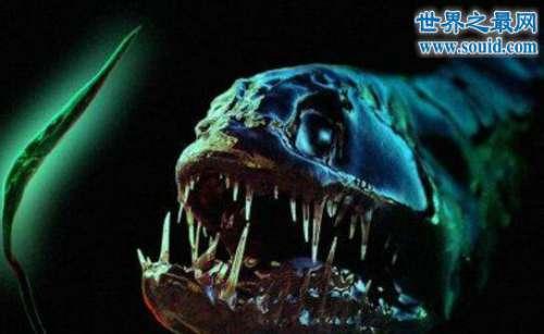 揭开深海龙鱼的真面目,满嘴獠牙置人于死地