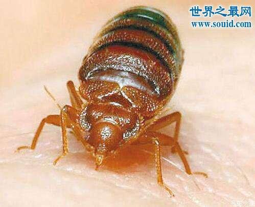 吸血虫吸食人血吞噬尸体,可在人体内存活三四十年