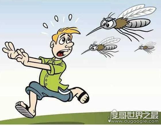蚊子喜欢什么血型,蚊子不会分辨人的血型(叮人主要靠气味)