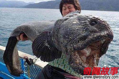 核辐射后的日本福岛如同世界末日 动物变得怪异