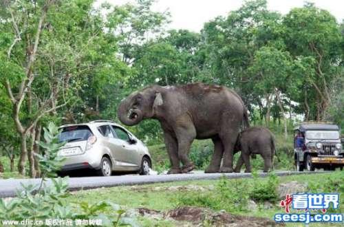 动物园大象用鼻子扔石头 7岁女孩被击中头部身亡