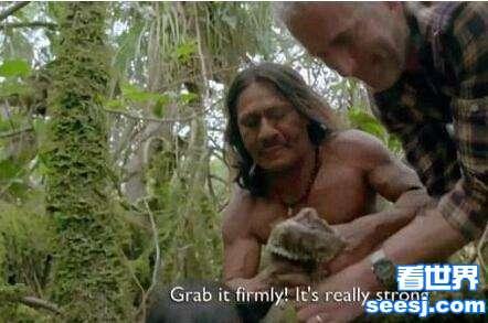 男子在原始森林录制节目,偶遇巨大绿蟒蛇