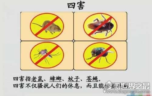 四害是哪四害,苍蝇、蚊子、老鼠、蟑螂这四种动物被称为四害