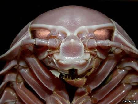 多图台湾发现80种深海新生物宛如外星异形