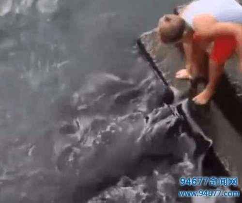 男子河边钓鱼发现黑色圆形怪鱼, 本想将其带回饲养却又无奈放生